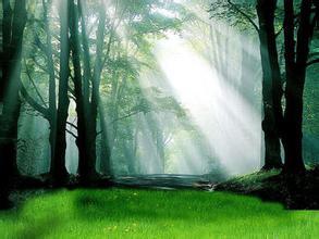 森林与人类