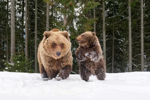 森林报:冬卷